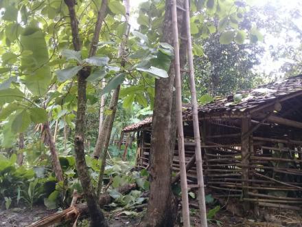 Angin Kencang Menyebabkan Pohon Tumbang dan Kabel Listrik Terputus